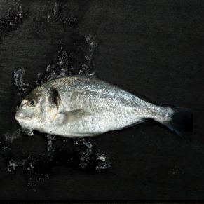 Fisch auf Technostein